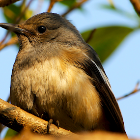 Close up!! by Arnab Choudhury - Animals Birds