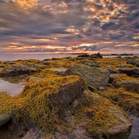 Seaweed by Eris Suhendra - Landscapes Sunsets & Sunrises ( sky, west kalimantan, sunsets, paloh, cloud, waterscapes, landscapes, nikon,  )