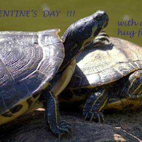 by Angelika Sauer - Typography Quotes & Sentences ( animals, celebration greetings, hug, green, colors, wildlife, turtles, valentine, close up, sunbathing, emotion, love, friends, february, nature, blue, friendship, compose, feelings, postcard, valentine's day )