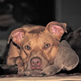 by Alexa Bessler - Animals - Dogs Portraits (  )