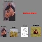 Klapa Snel Hest