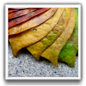 Best Autumn Wallpapers icon