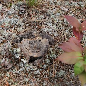 breaking through by Tamara Koontz - Nature Up Close Mushrooms & Fungi