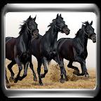 5D Galloping Horses