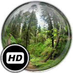 Panorama Wallpaper: Forest