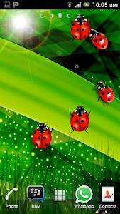 Colorful Ladybug Garden LWP v1.0