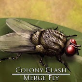 Colony Clash : Merge Fly