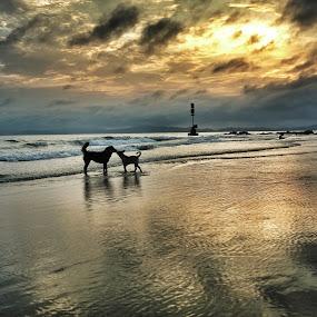love story by Anh Hà Triệu - Animals - Dogs Playing ( kiss, dogs, cotoisland, sea, nightfall )