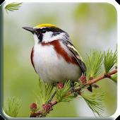 3D Bird Sound