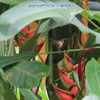 uncertain hummingbird