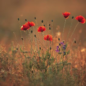 by Ron Olivier - Flowers Flowers in the Wild (  )