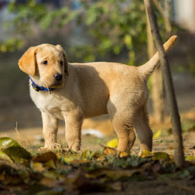 MaxX by Gaurav Madhopuri - Novices Only Pets