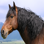 Top 20 Horse Breeds