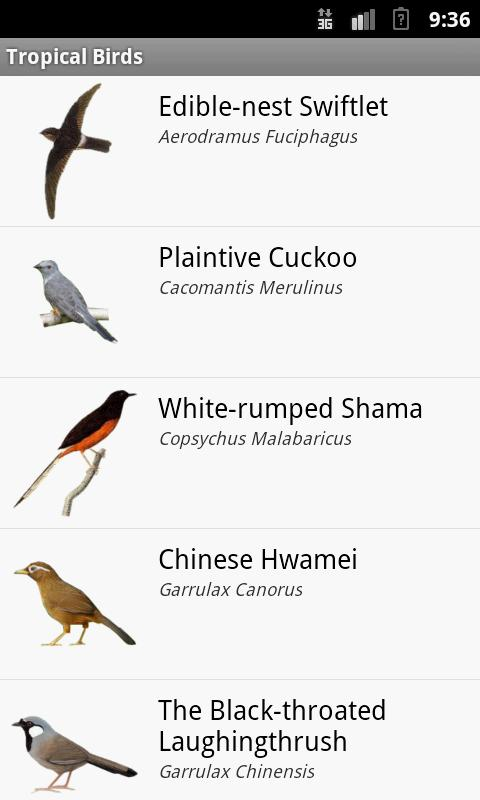Names of Tropical Birds Tropical Birds Screenshot
