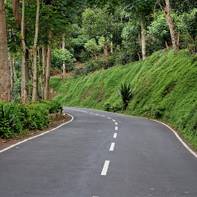 greenish by Sankar GM - Transportation Roads ( greenish, hills, green, india, road, yercaud )