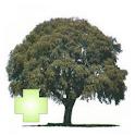 Guía de Arboles Plus icon