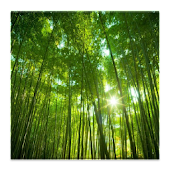 3D forest HD live wallpaper