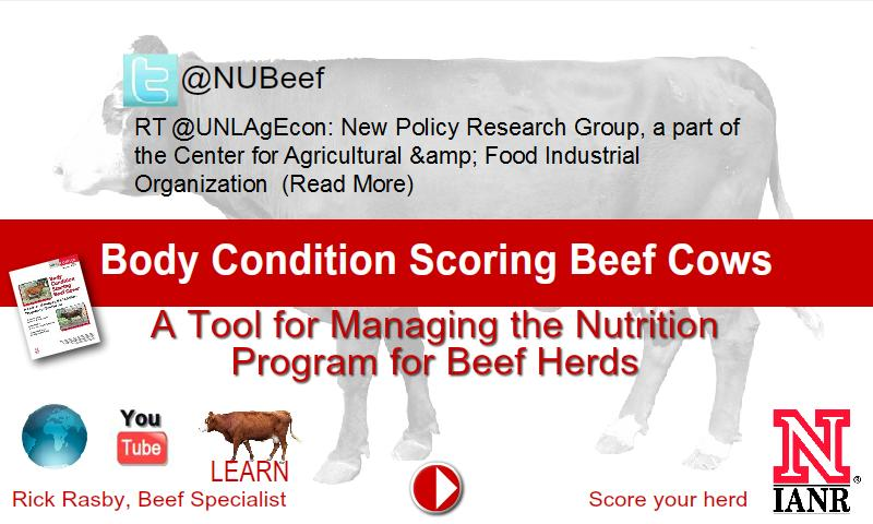 Body Condition Beef Cattle - screenshot