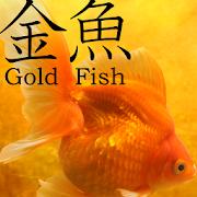 Gold Fish 3D Live Wallpaper