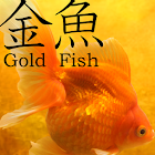 Gold Fish 3D Live Wallpaper icon