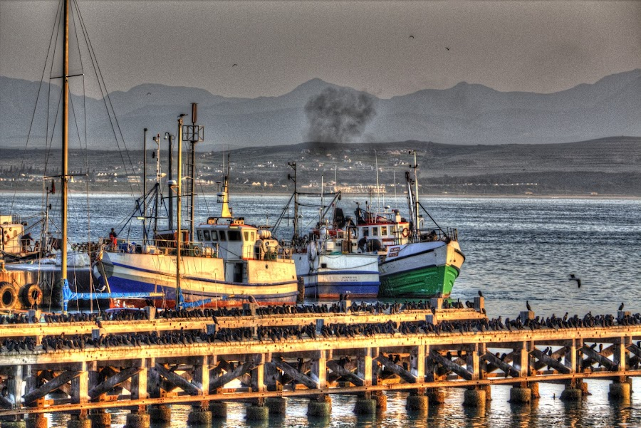 by William Louw - Transportation Boats ( harbour boats, mossel bay, fishing trawler, south africa, boat, fishing boat )