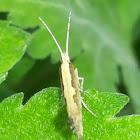 Moth  ???