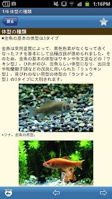金魚図鑑ベスト100のおすすめ画像4
