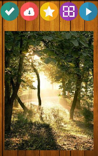 森林自然之謎