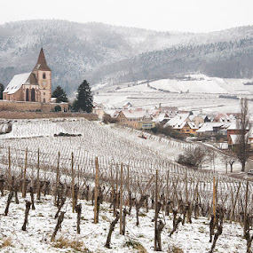 Hunawihr and it's fortified church by Wim De Koster - Landscapes Travel ( vineyard, hunawihr, alsace, elsass, nikond610, elzas )