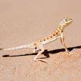 Bio-diversity of UAE