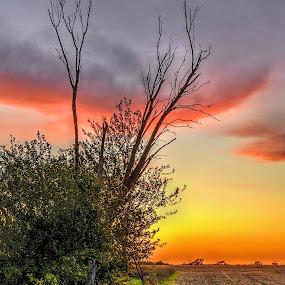 Edge of the Field by DE Grabenstein - Landscapes Prairies, Meadows & Fields