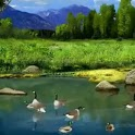Relaxing Ducks In Pond icon