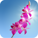 Orchids Live Wallpaper logo