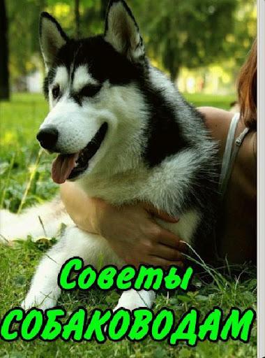 Советы собаководам и не только