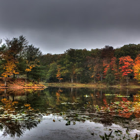 Stokes State Forest by Ward Vogt - Landscapes Waterscapes ( water, orange, reflection, green, state, photography, new jersey, autumn, fall, state park, branchville, nj, reflect, ward vogt, stokes )
