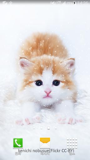 기지개피는고양이배경