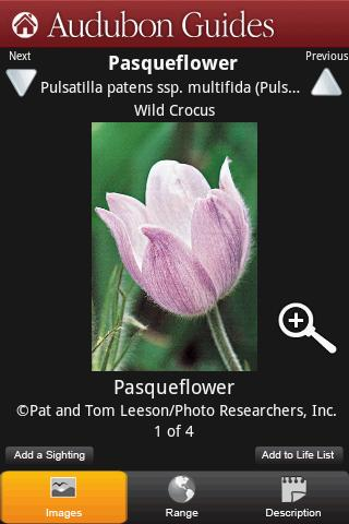 Audubon Wildflowers - screenshot