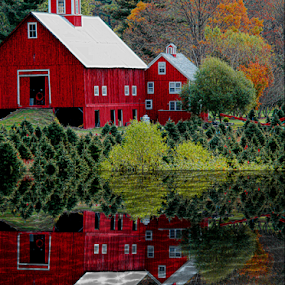 Big Red Barn Reflection by Janet Lyle - Buildings & Architecture Other Exteriors ( barn, autumn, foliage, fall,  )