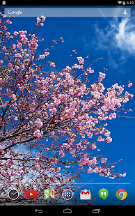 Cherry Blossoms Wallpaper- screenshot thumbnail