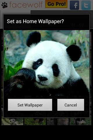 Panda Wallpapers - screenshot