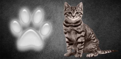 Najlepšie zadarmo mačička pics