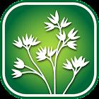 1350 Iowa Wildflowers icon