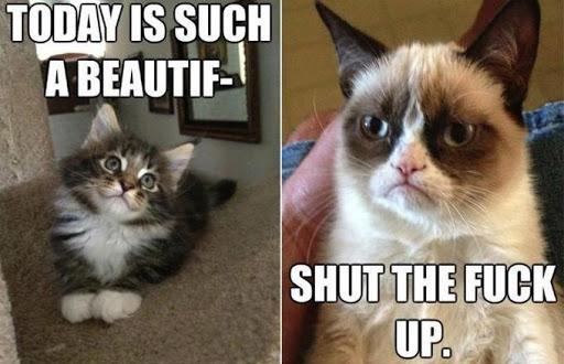 Talk With Grumpy Cat
