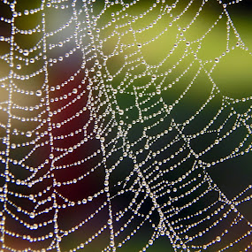 Drops by Mukesh Mishra - Abstract Water Drops & Splashes ( spider wed water drops macro photgraphy,  )
