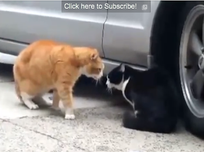 Cat Fight Dog - screenshot thumbnail