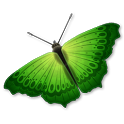 Butterfly Photo Gallery icon