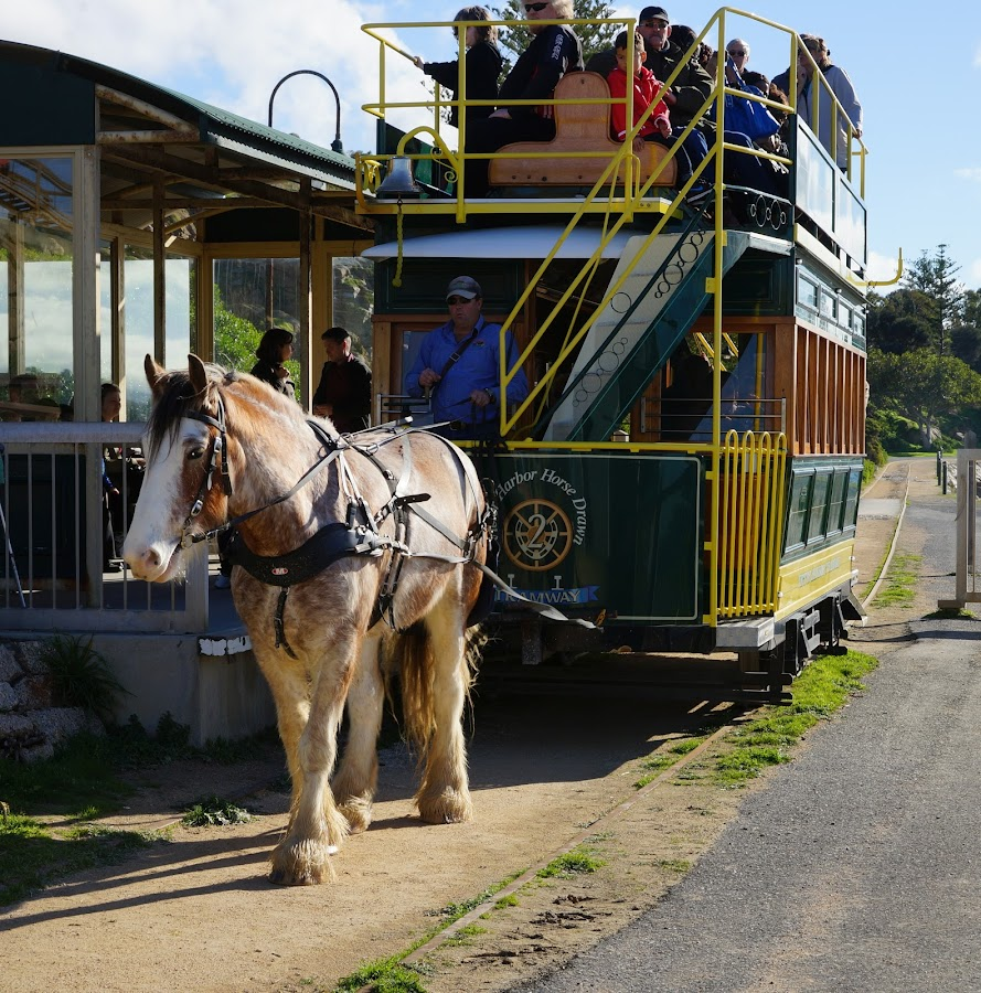 Horse Tram by Jefferson Welsh - Transportation Other