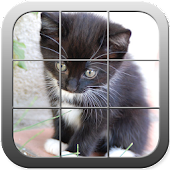 Picture Puzzle Cute Cats
