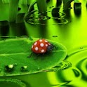 Lucky Ladybug On Green Phone logo