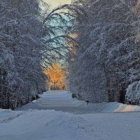 by Jeff Weaver - City,  Street & Park  Street Scenes ( winter, fairbanks, sunset, jeff weaver, snow, street, alaska, biggimote )